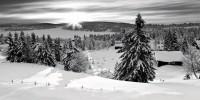 Aspen Snow low