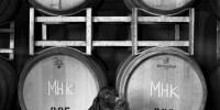 Dogs-Wine_Barrels